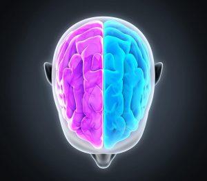 Compassion-brain